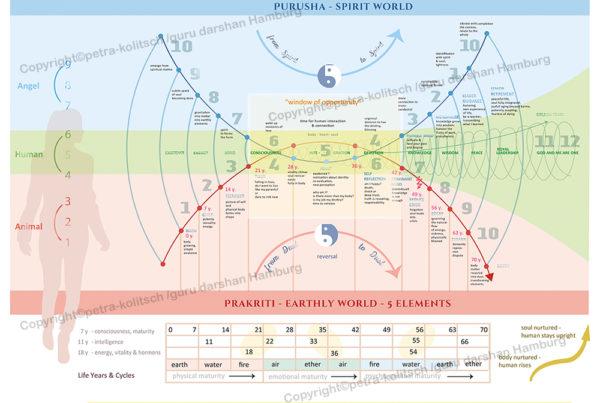 Lebenszyklen Yogaposter Petra Kolitsch